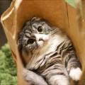 neko-box-bag