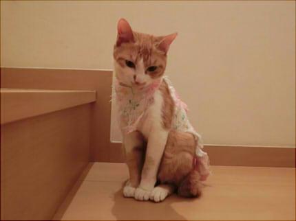 猫のいたずらに困ったりしていませんか?柱で爪とぎをしてしまう、床に尿を撒き散らす、噛み癖がある…などなど。悪いことをしたときには人間同様、ちゃんとしつけを  ...