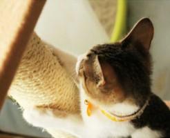 cat-claw4