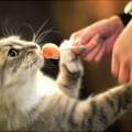cat-snack