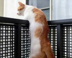 cat-verandah