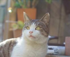stray-cat05